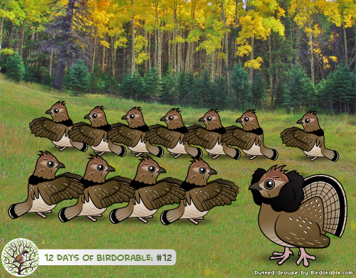 Twelve Drumming Ruffed Grouse