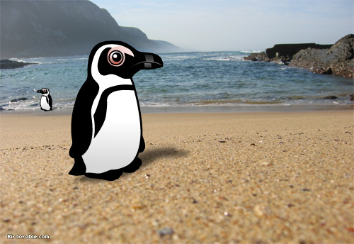 Birdorable African Penguin