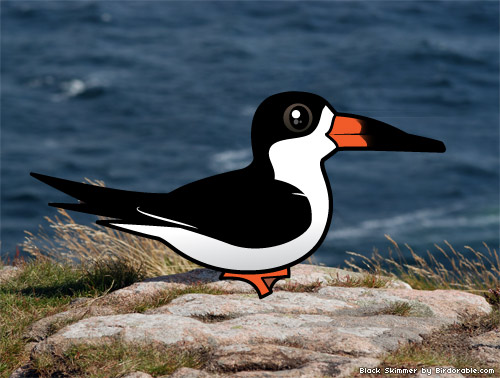 Birdorable Black Skimmer