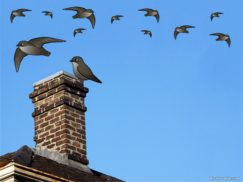 Cute Chimney Swifts