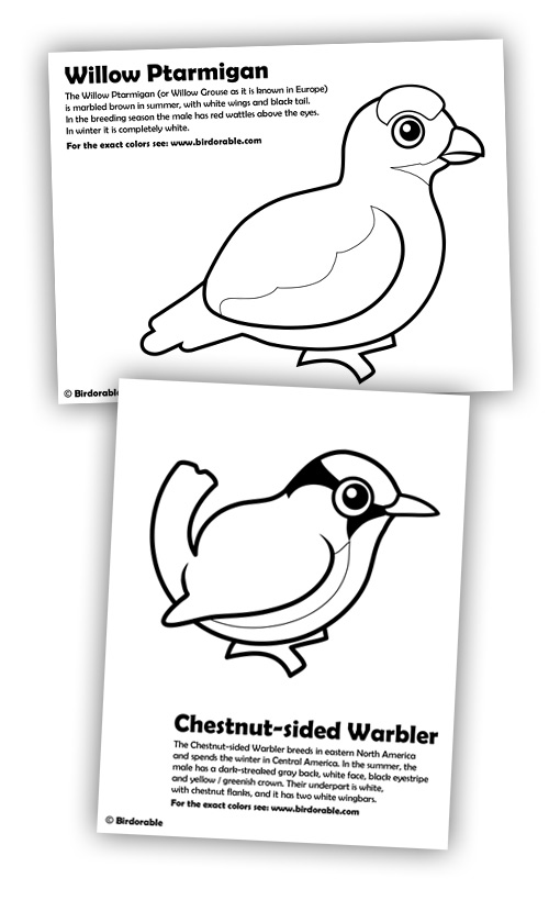 Birdorable Willow Ptarmigan and Chestnut-sided Warbler coloring pages