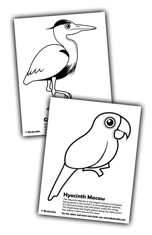Birdorable Herron and Macaw Coloring Pages