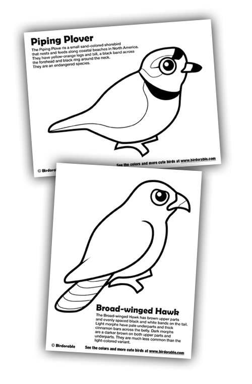 Birdorable Coloring Pages: Piping Plover and Broad-winged Hawk