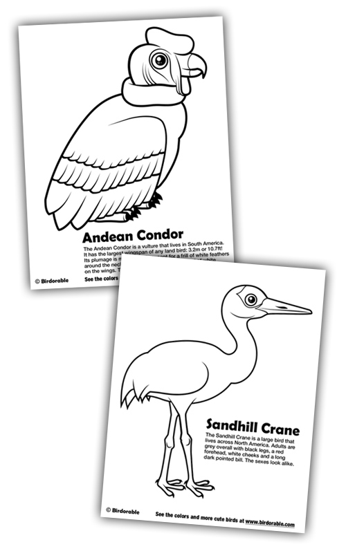 Birdorable Coloring Pages: Andean Condor and Sandhill Crane
