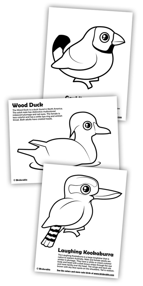 Birdorable Coloring Pages: Gouldian Finch, Wood Duck and Laughing Kookaburra