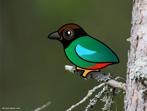 Birdorable Hooded Pitta