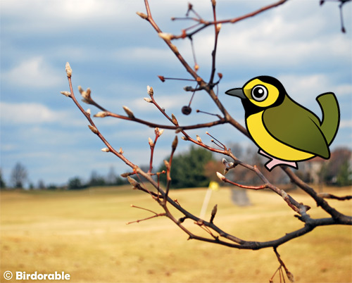 Birdorable Hooded Warbler