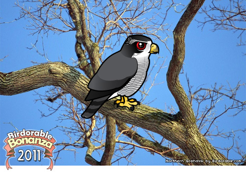 Birdorable Northern Goshawk