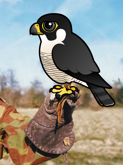 Birdorable Peregrine Falcon on a glove