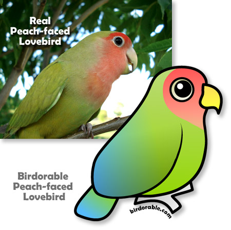 Real and Birdorable Peach-faced Lovebird