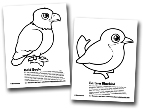 Bald Eagle Eastern Bluebird Coloring Pages In Coloring Pages Eagles