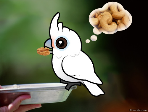 Birdorable Goffin's Cockatoo with nuts