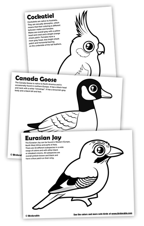 Birdorable Coloring Pages: Cockatiel, Canada Goose and Eurasian Jay
