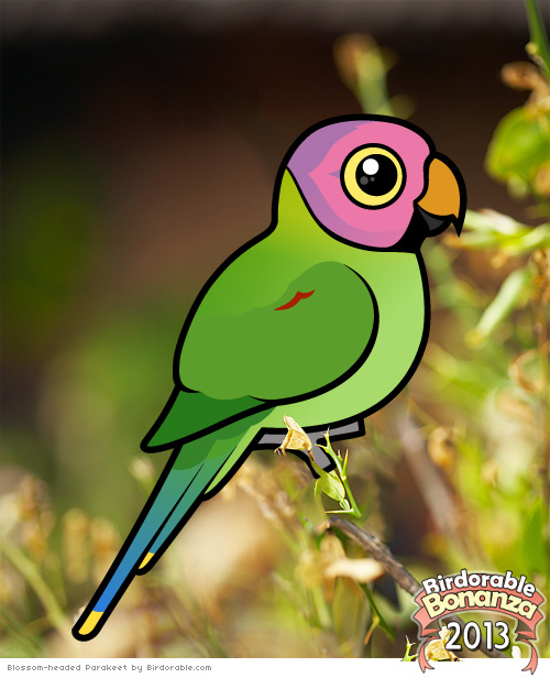 Bonanza-2013-Blossom-headed-Parakeet