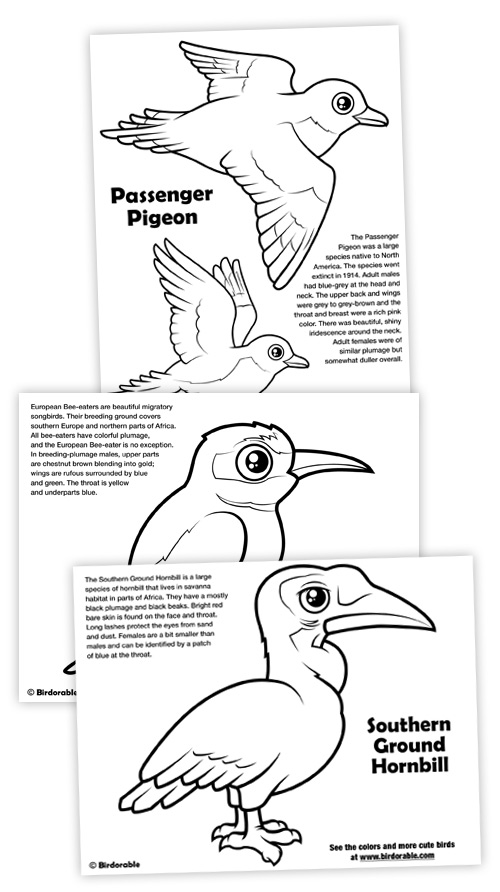 Coloring Pages of Passenger Pigeon, European Bee-eater and Southern Ground Hornbill