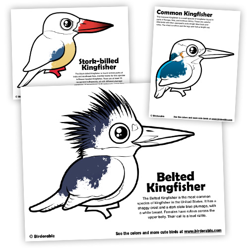 kingfisher-coloring-preview