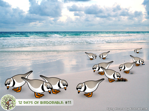 Eleven Piping Plovers