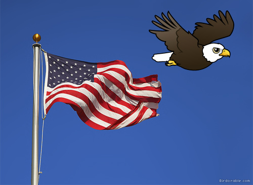 Bald Eagle with U.S. flag