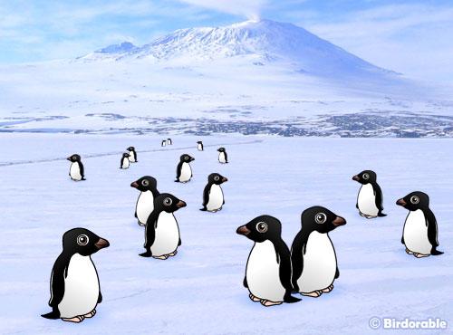 Fun Adelie Penguin Facts by Birdorable