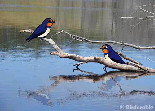 What kind of bird is that? Barn Swallow! in New Birds ...