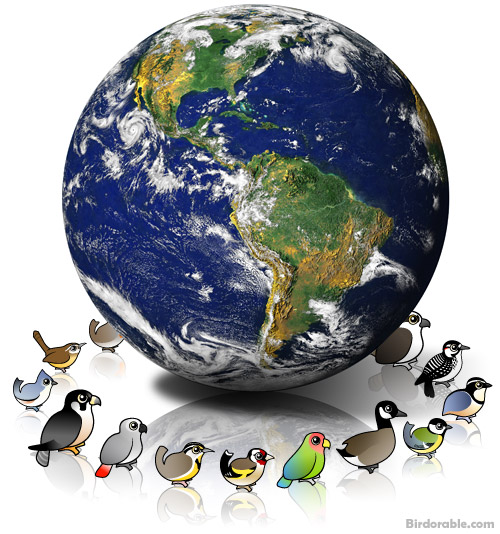 First birds on earth