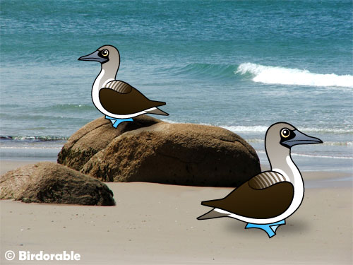 Two Birdorable Blue-footed Boobies