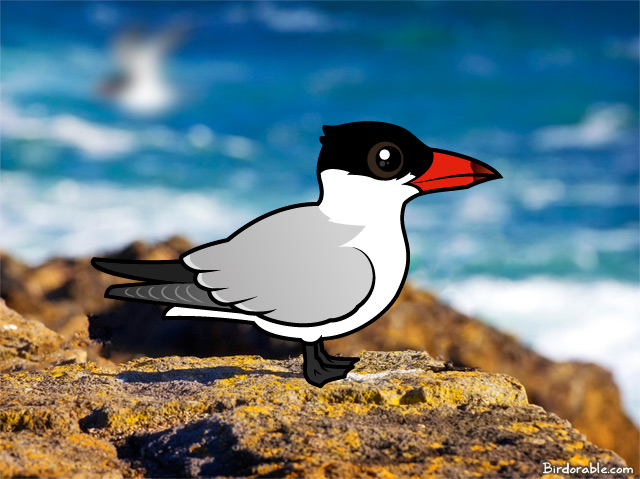 Birdorable Caspian Tern