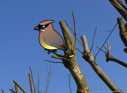 Birdorable Cedar Waxwing