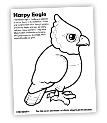 birdorable coloring pages for cute harpy eagle