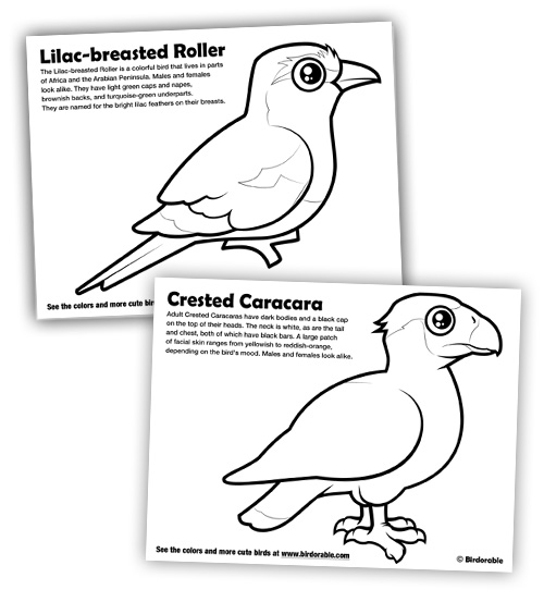 birdorable coloring pages for lilac breasted roller and crested caracara
