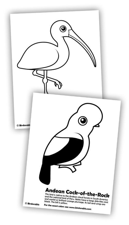 Birdorable Ibis and Andean Cock-of-the-rock coloring pages
