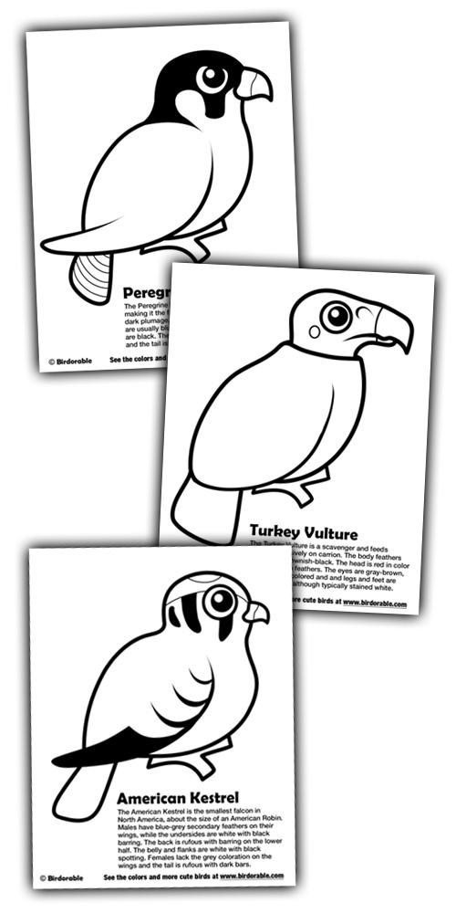 birdorable coloring pages peregrine falcon american kestrel and turkey vulture