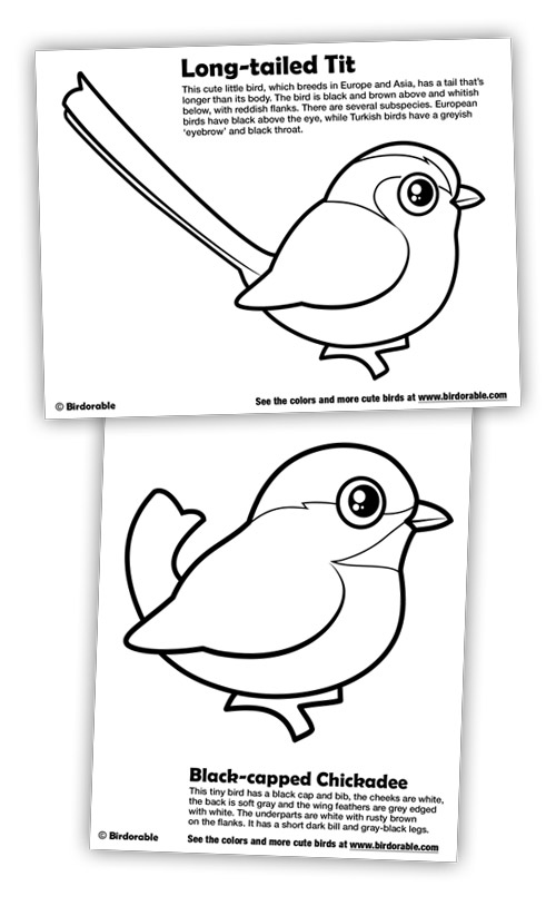 New Coloring Pages: Black-capped Chickadee and Long-tailed Tit in ...