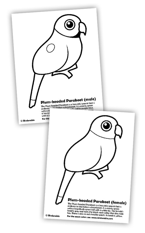 Birdorable Plum-headed Parakeets coloring page