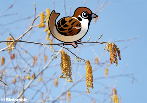 Cute Birdorable Eurasian Tree Sparrow
