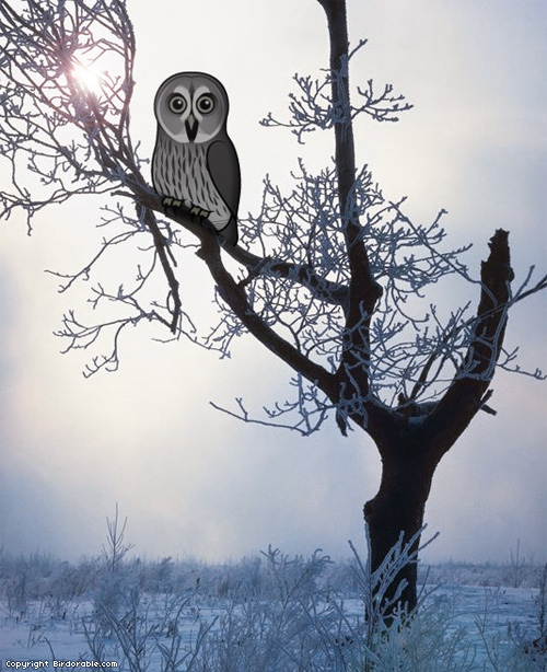 Birdorable Great Grey Owl