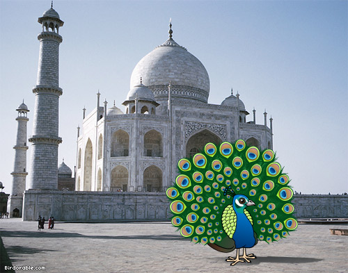 Birdorable Indian Peafowl