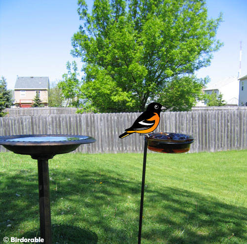 Birdorable Oriole at feeder