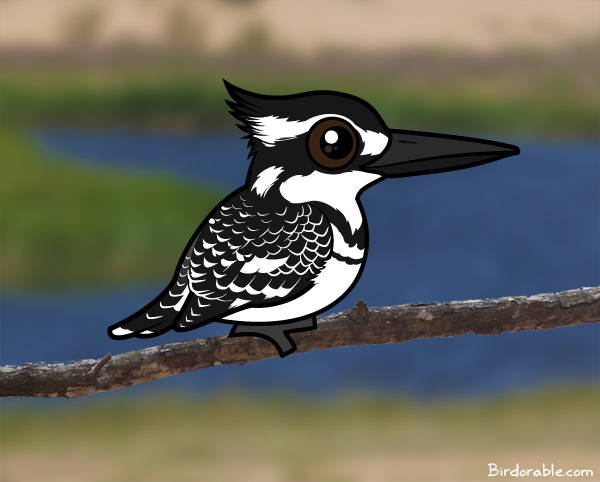 Birdorable Pied Kingfisher