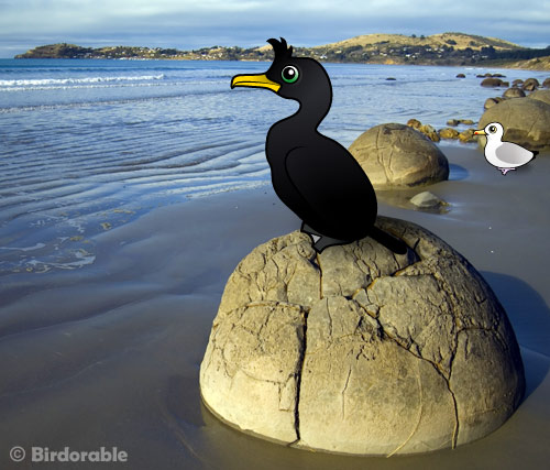 birdorable European Shag