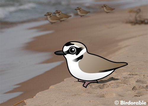 Birdorable Snowy Plovers