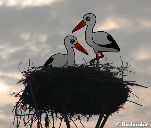 Birdorable White Storks