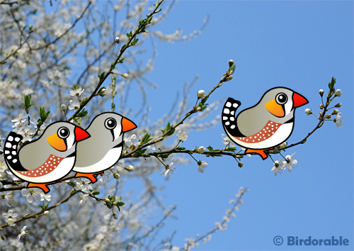 Introducing the Birdorable Zebra Finch in New Birds, Finches