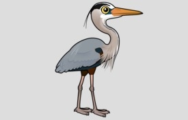 City Bird: Seattle's Great Blue Heron