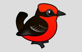 New bird alert: Vermilion Flycatcher