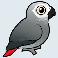 View more information about African Grey Parrot