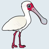 View more information about African Spoonbill