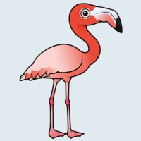 View more information about American Flamingo