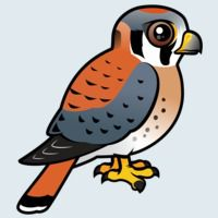 View more information about American Kestrel