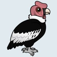 View more information about Andean Condor